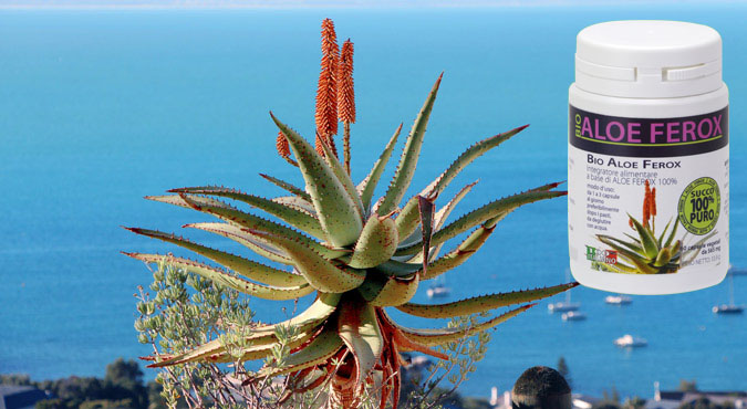 Aloe ferox proprietà terapeutiche per dimagrire: La recensione + PROMO