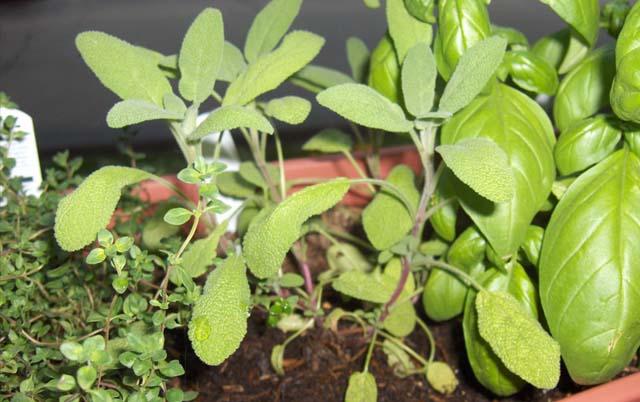 Quali sono le erbe officinali che fanno bene alla salute