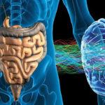 Microbiota intestinale : di cosa si tratta e quali funzioni svolge