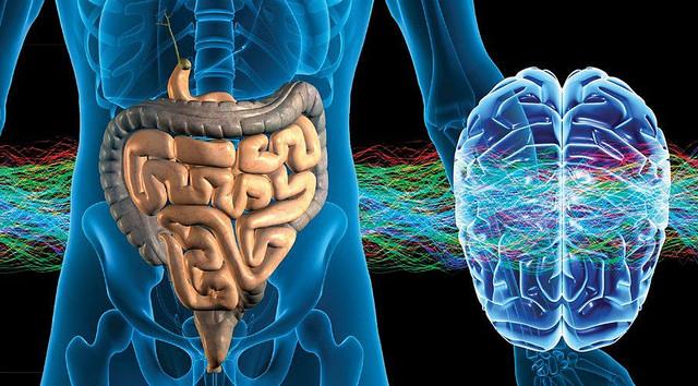 microbiota e cervello
