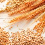 I benefici dell'olio di germe di grano