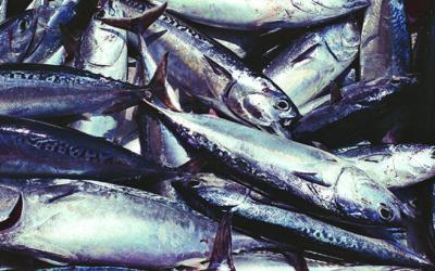mangiare solo pesce