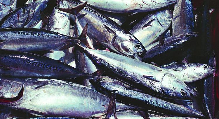 pescetarianismo cos'è? é una dieta salutare?