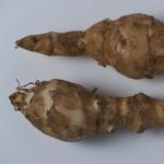 Topinambur che cos'è e perchè è usato nelle diete?